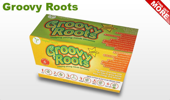 groovy-roots